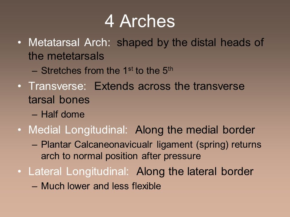 4 Arches Metatarsal Arch: shaped by the distal heads of the metetarsals. Stretches from the 1st to the 5th.