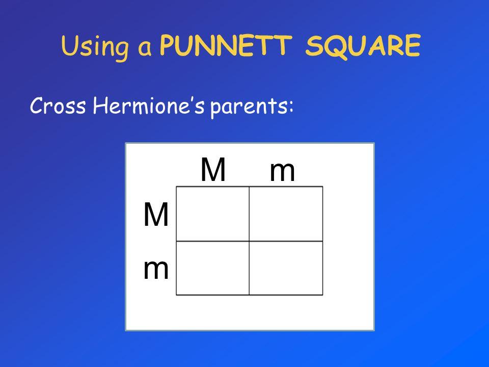 Using a PUNNETT SQUARE Cross Hermione's parents: M m