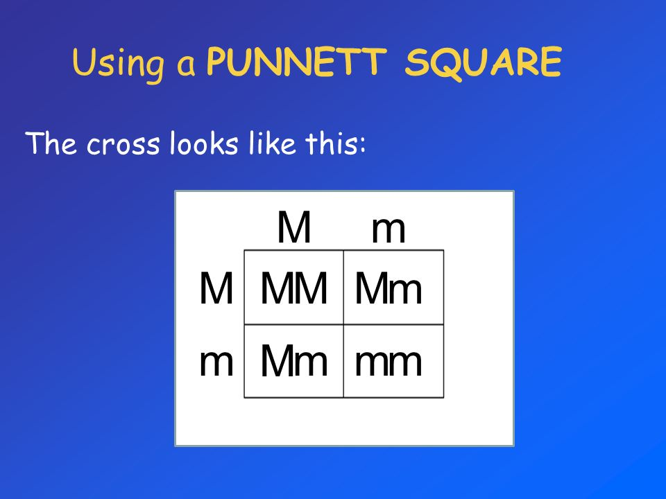 Using a PUNNETT SQUARE The cross looks like this: M m