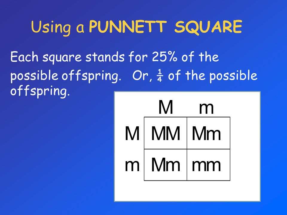 M m Using a PUNNETT SQUARE Each square stands for 25% of the