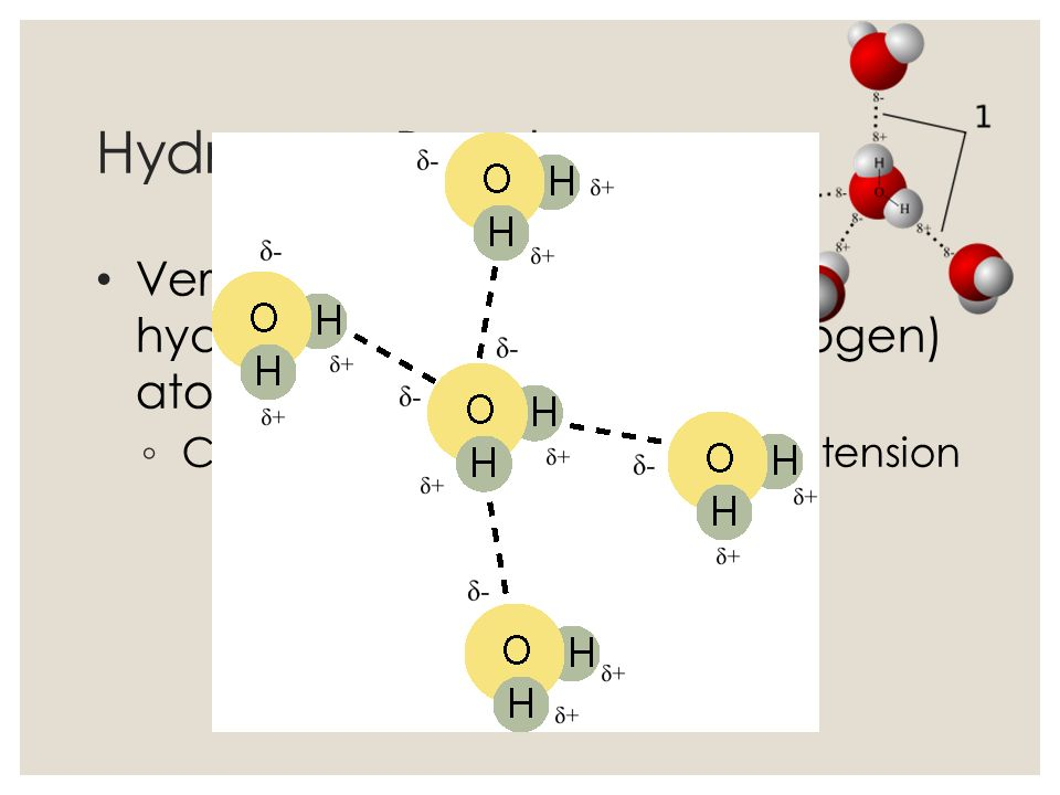 Hydrogen Bonds Very weak bonds between hydrogen and oxygen (or nitrogen) atom.