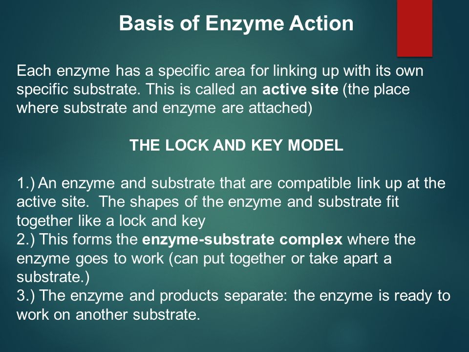 Basis of Enzyme Action