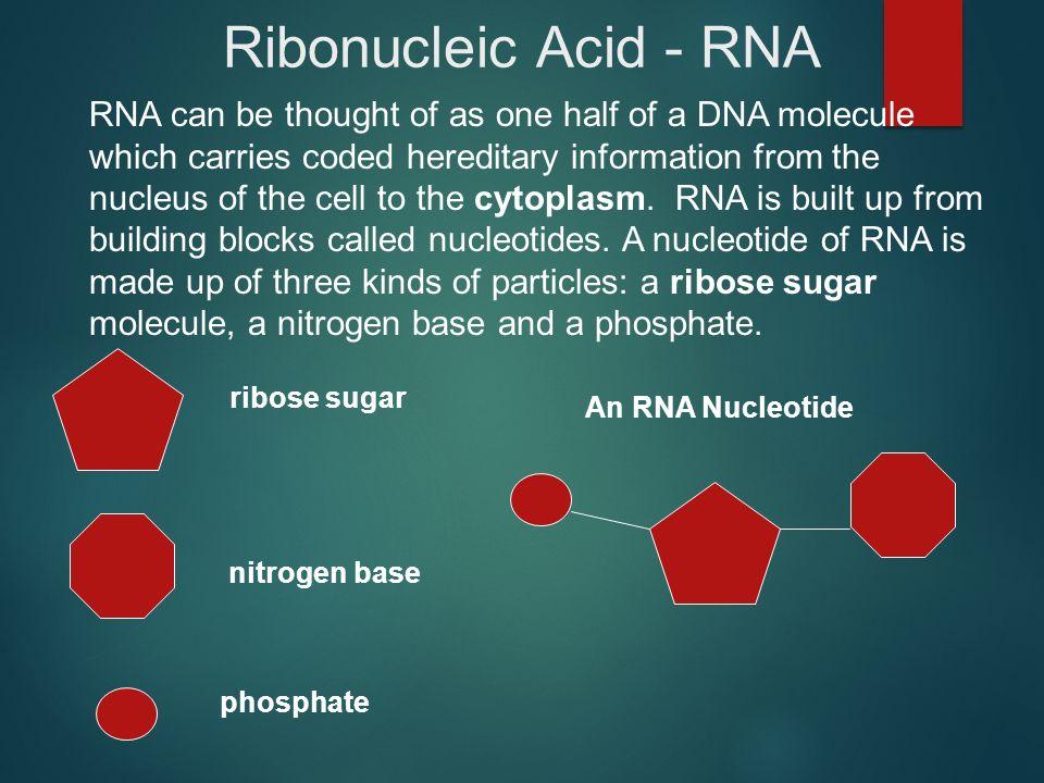Ribonucleic Acid - RNA