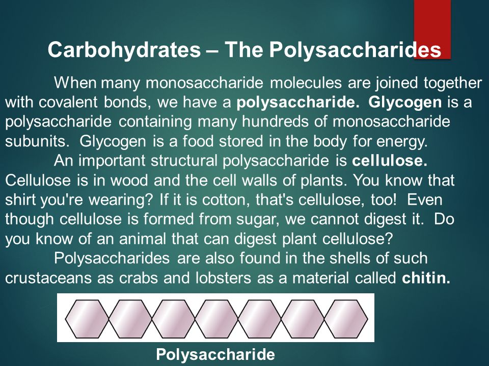 Carbohydrates – The Polysaccharides