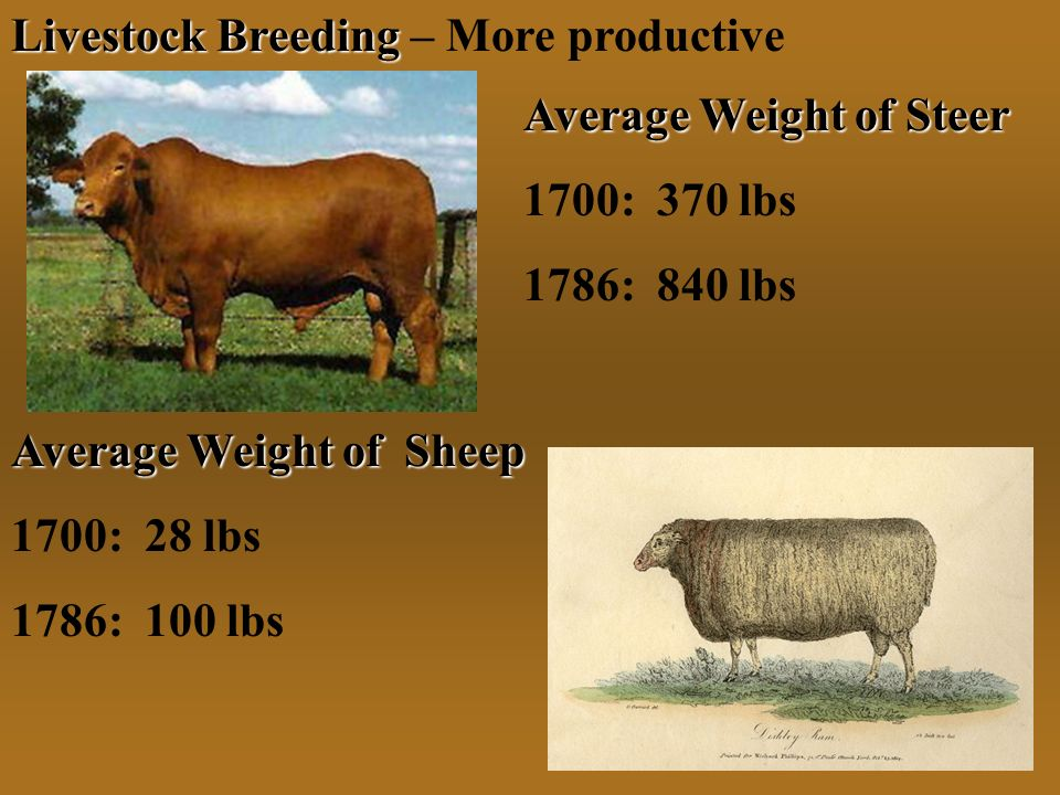 Livestock Breeding – More productive