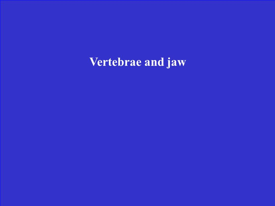 Vertebrae and jaw
