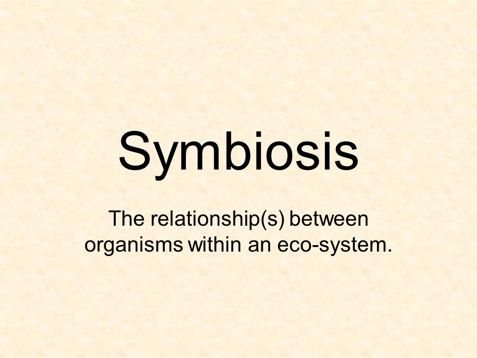 The relationship(s) between organisms within an eco-system.