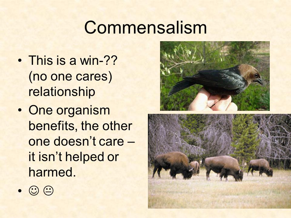 Commensalism This is a win- (no one cares) relationship