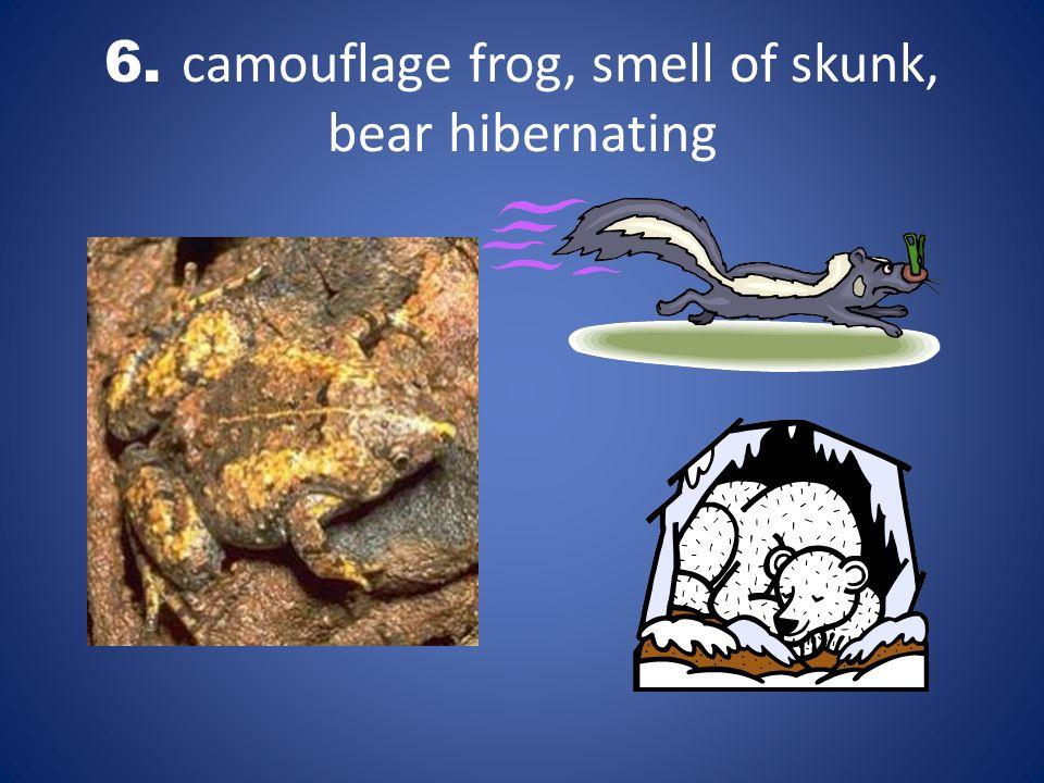 6. camouflage frog, smell of skunk, bear hibernating