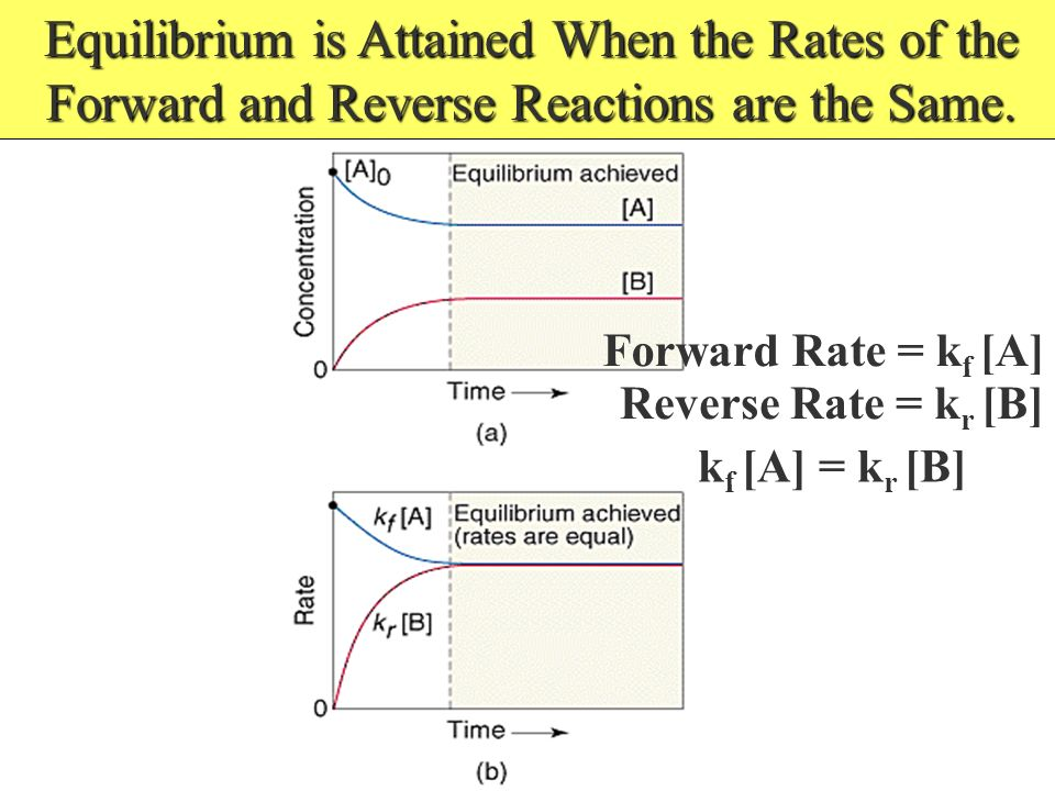 Equilibrium is Attained When the Rates of the