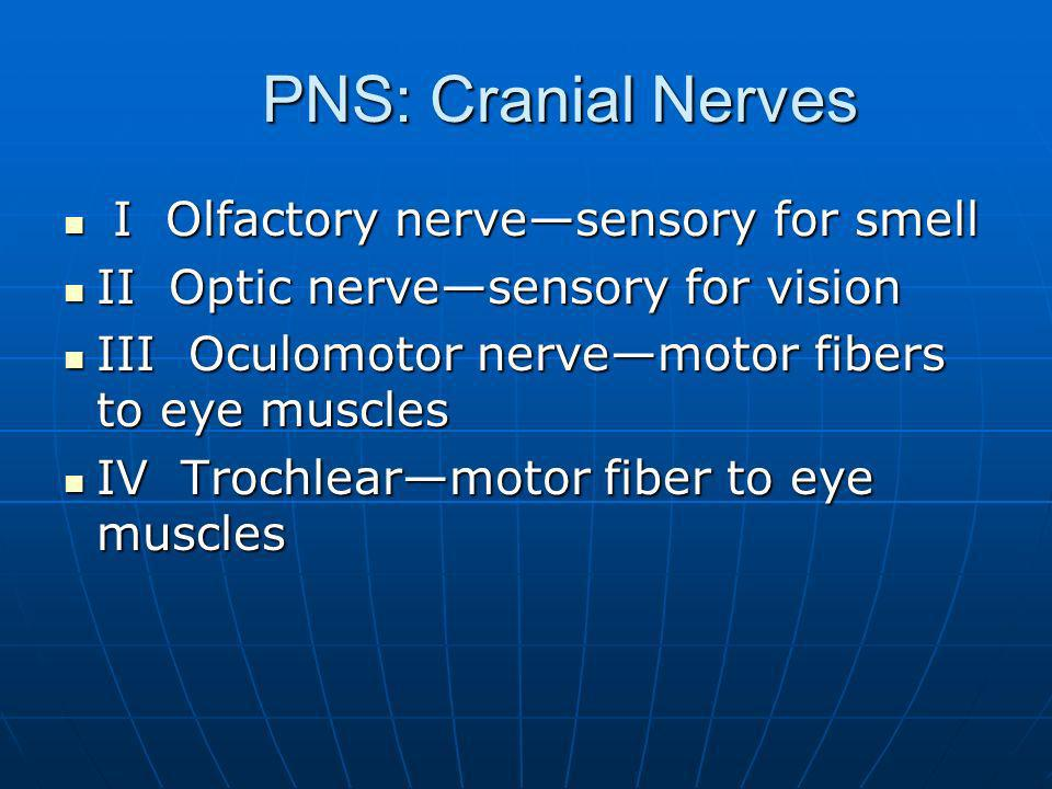 PNS: Cranial Nerves I Olfactory nerve—sensory for smell