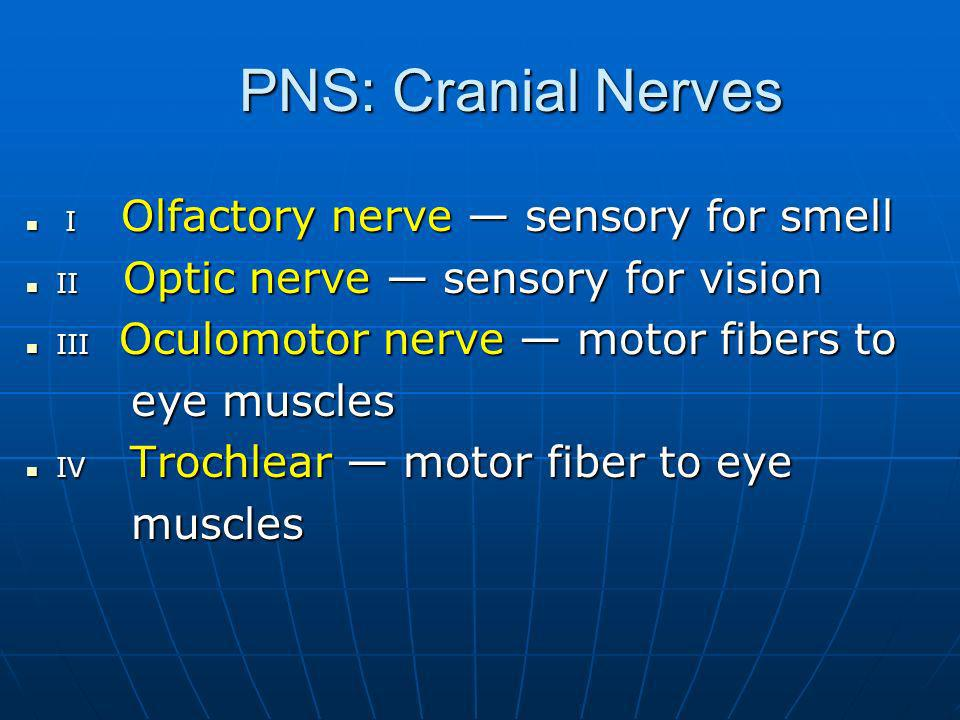 PNS: Cranial Nerves eye muscles muscles
