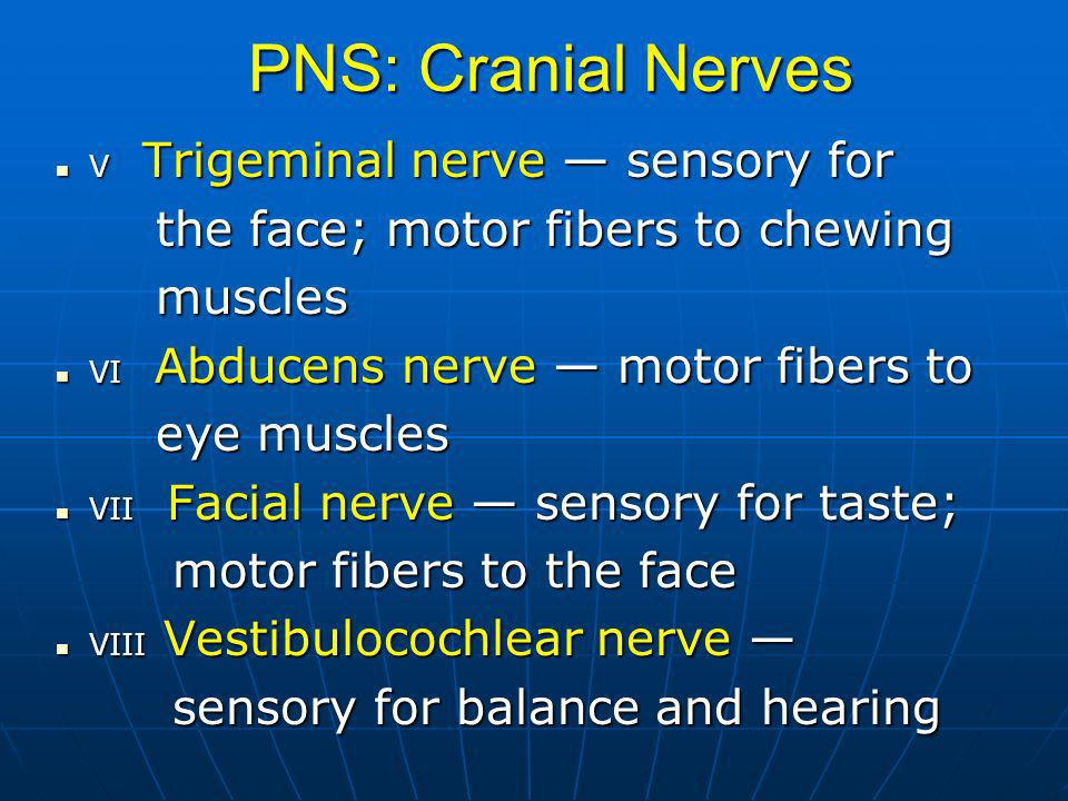 PNS: Cranial Nerves the face; motor fibers to chewing muscles