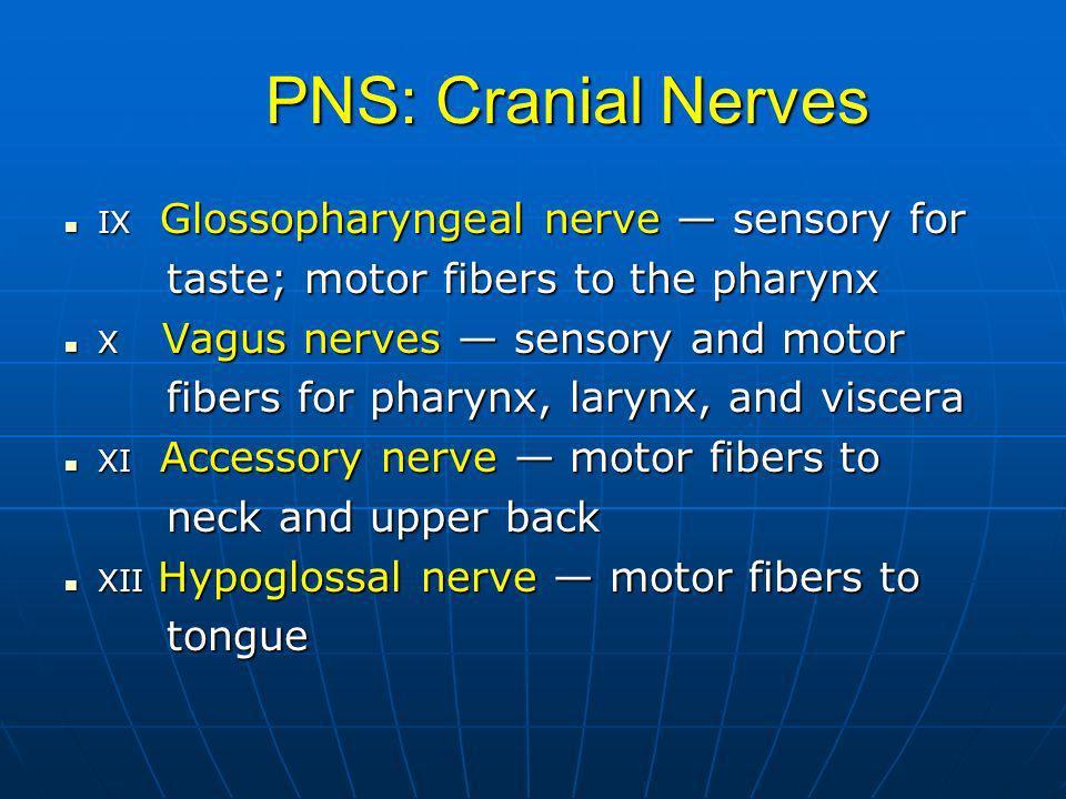 PNS: Cranial Nerves taste; motor fibers to the pharynx
