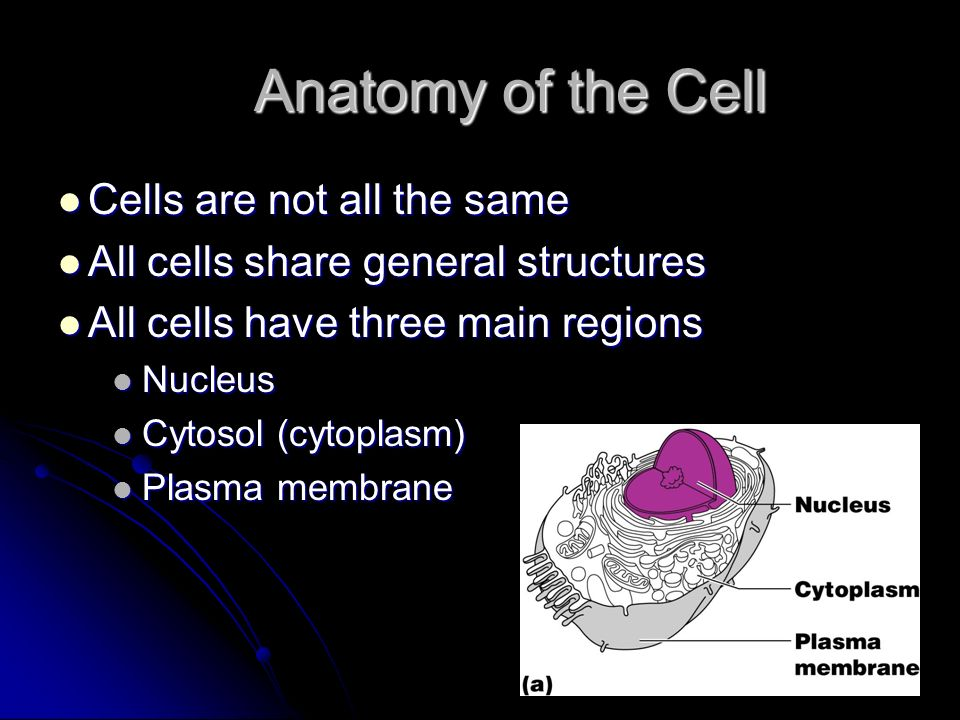 Anatomy of the Cell Cells are not all the same
