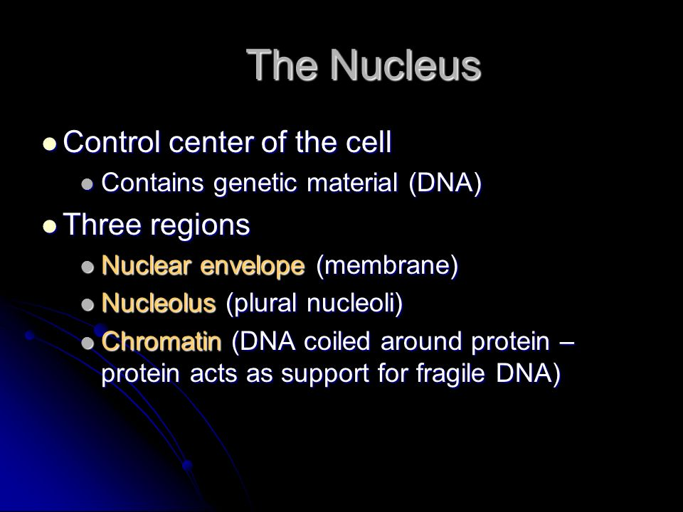 The Nucleus Control center of the cell Three regions