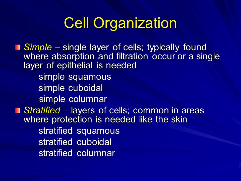 Cell Organization Simple – single layer of cells; typically found where absorption and filtration occur or a single layer of epithelial is needed.