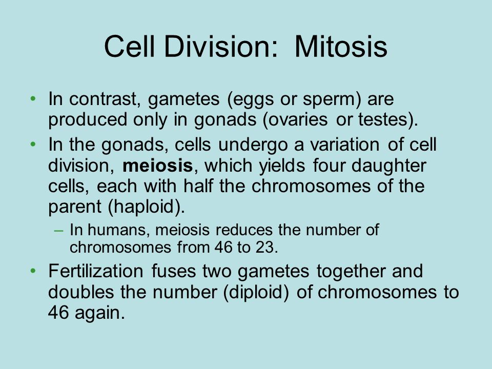 Cell Division: Mitosis