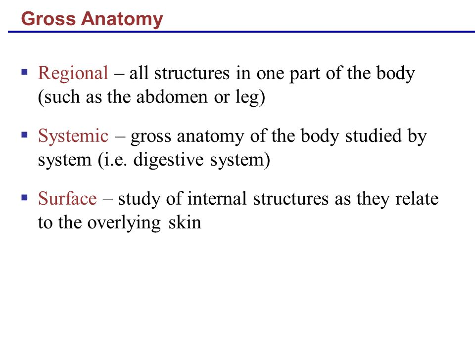Gross Anatomy Regional – all structures in one part of the body (such as the abdomen or leg)