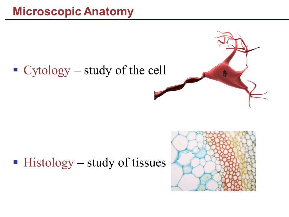 Cytology – study of the cell