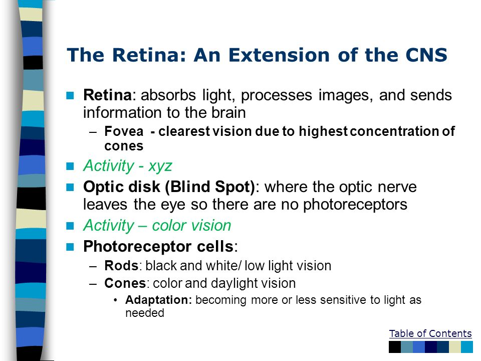 The Retina: An Extension of the CNS