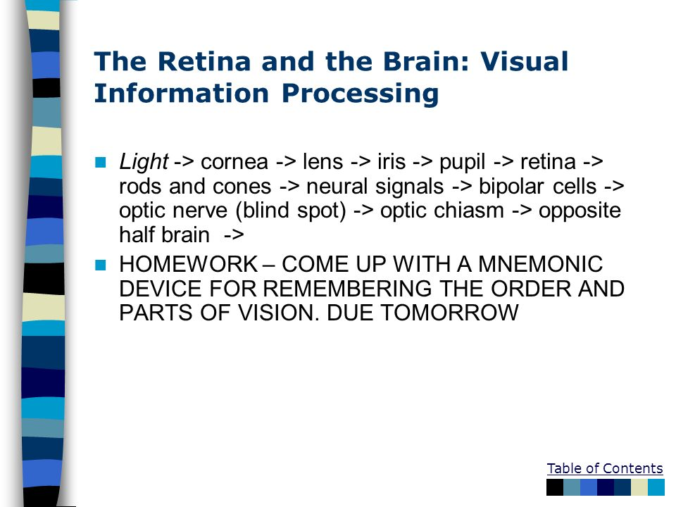 The Retina and the Brain: Visual Information Processing
