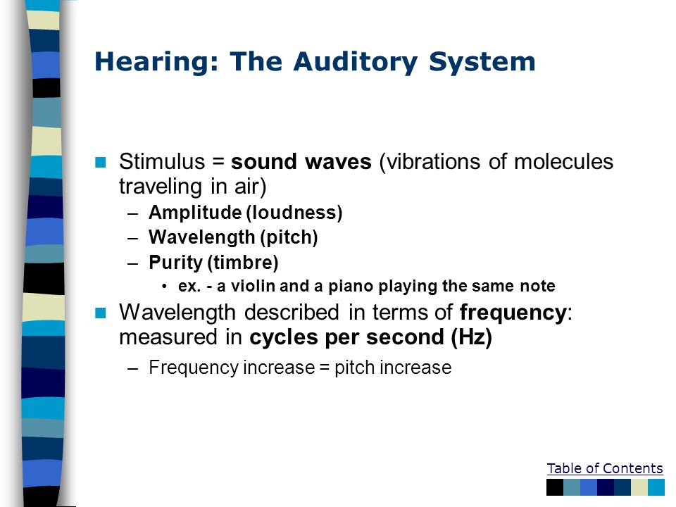 Hearing: The Auditory System