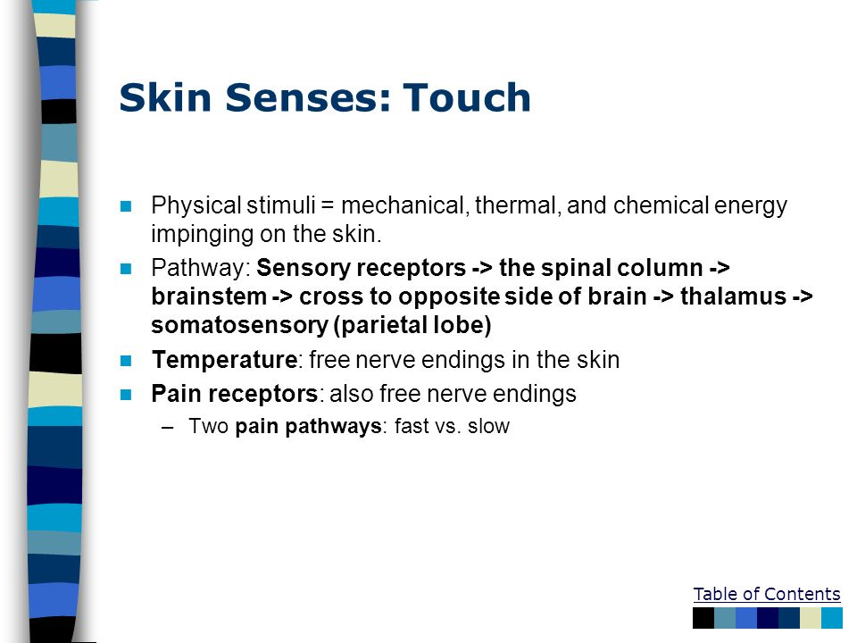 Skin Senses: Touch Physical stimuli = mechanical, thermal, and chemical energy impinging on the skin.