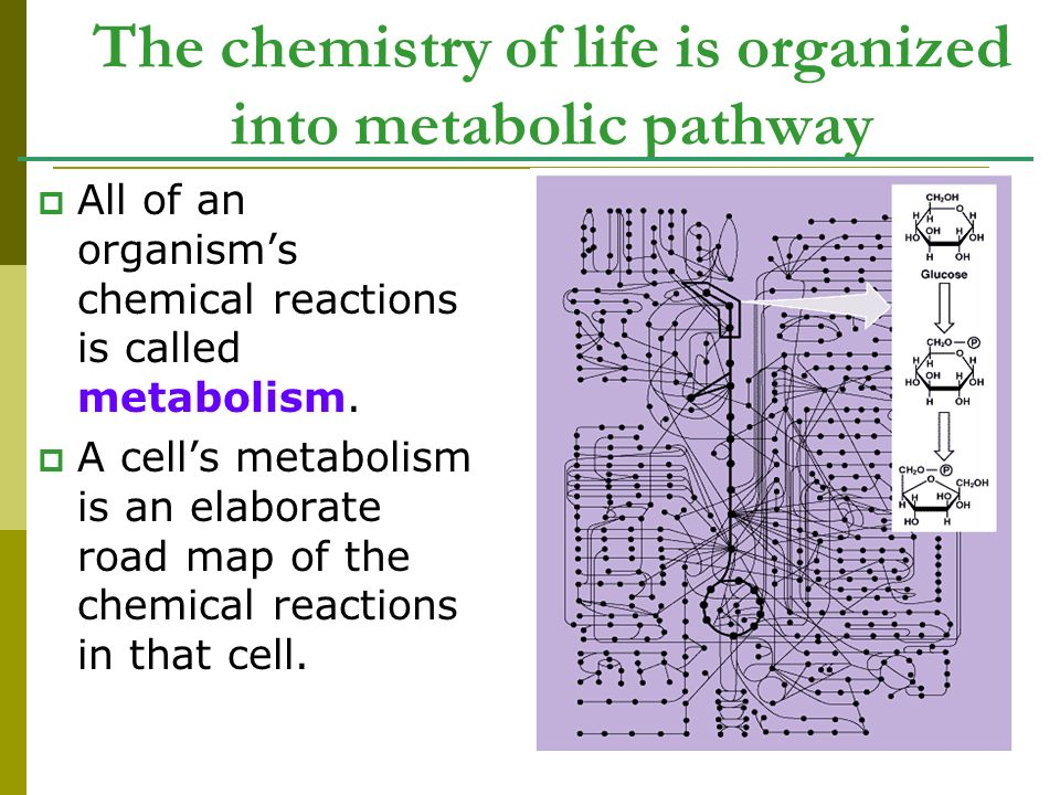 The chemistry of life is organized into metabolic pathway