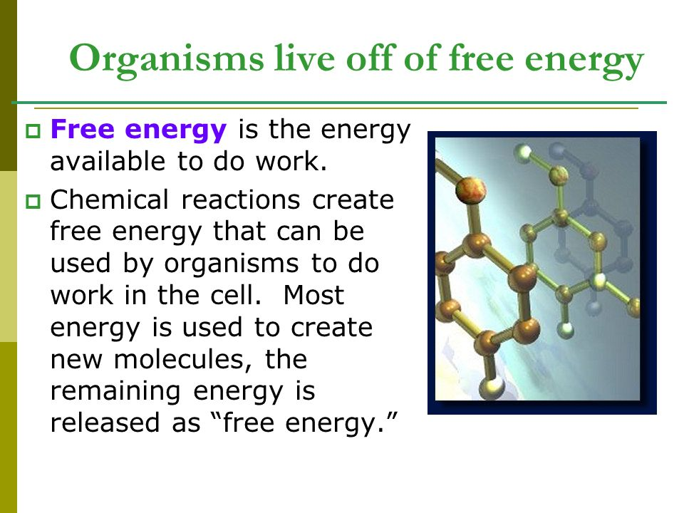 Organisms live off of free energy