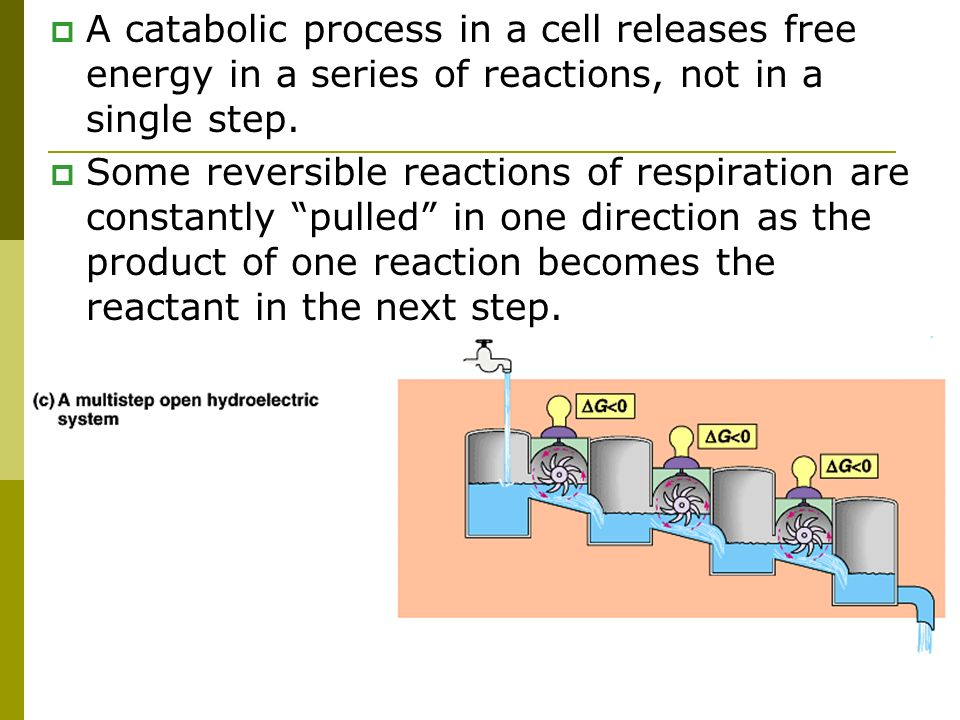 A catabolic process in a cell releases free energy in a series of reactions, not in a single step.
