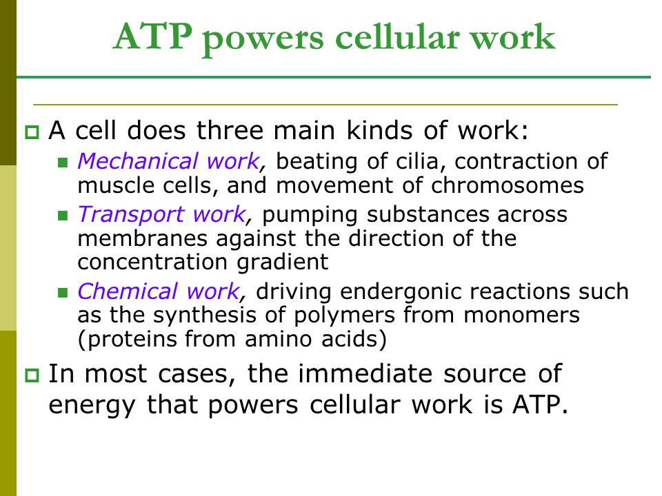ATP powers cellular work