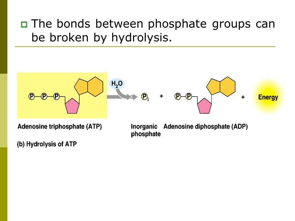 The bonds between phosphate groups can be broken by hydrolysis.