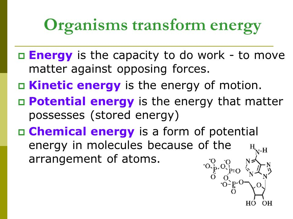 Organisms transform energy