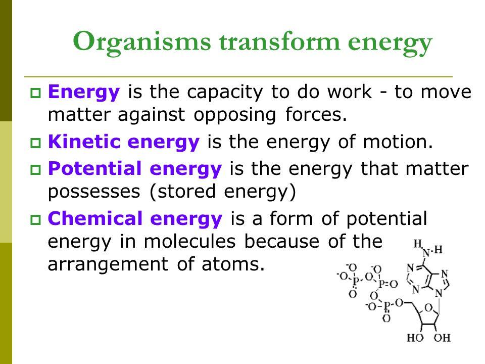 Organisms transform energy