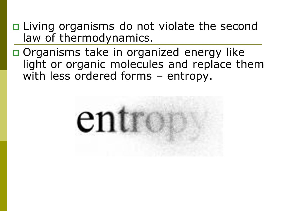 Living organisms do not violate the second law of thermodynamics.