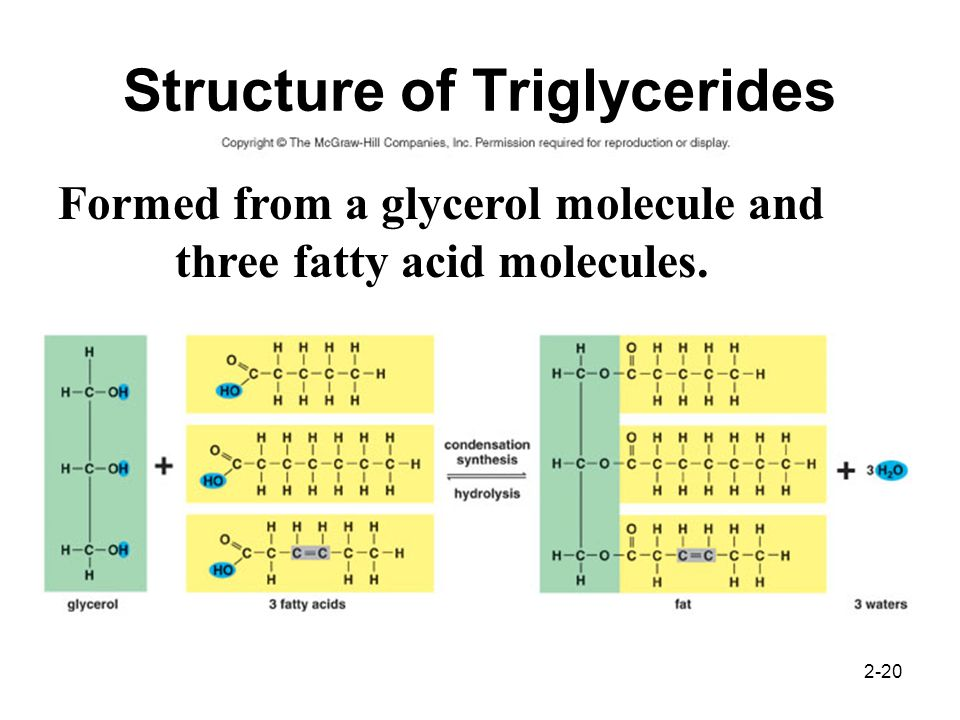 Structure of Triglycerides