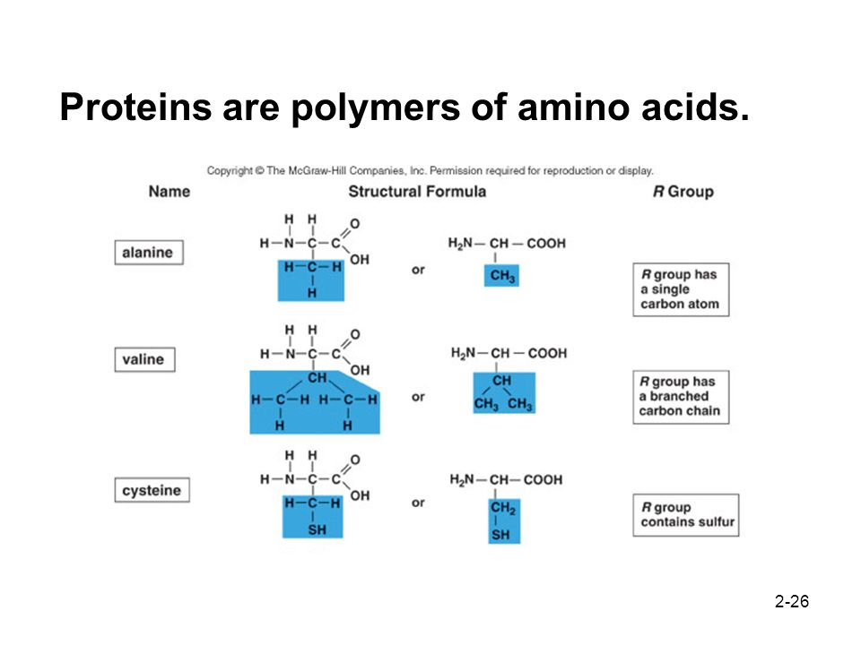 Proteins are polymers of amino acids.