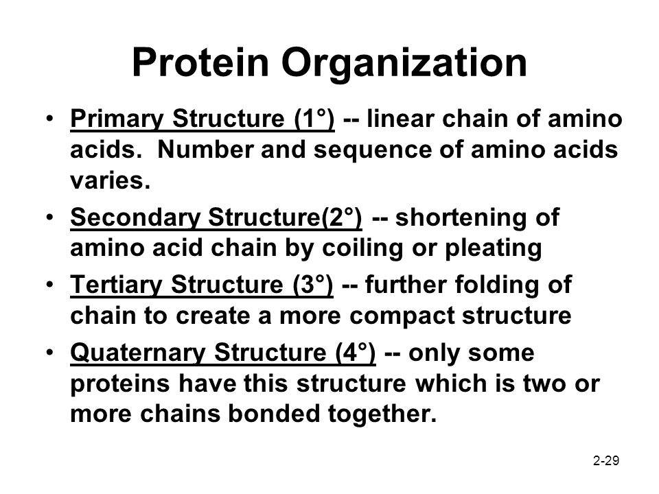 Protein Organization Primary Structure (1°) -- linear chain of amino acids. Number and sequence of amino acids varies.
