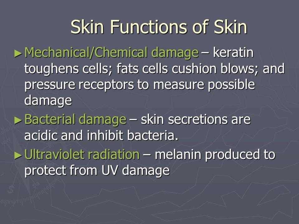 Skin Functions of Skin