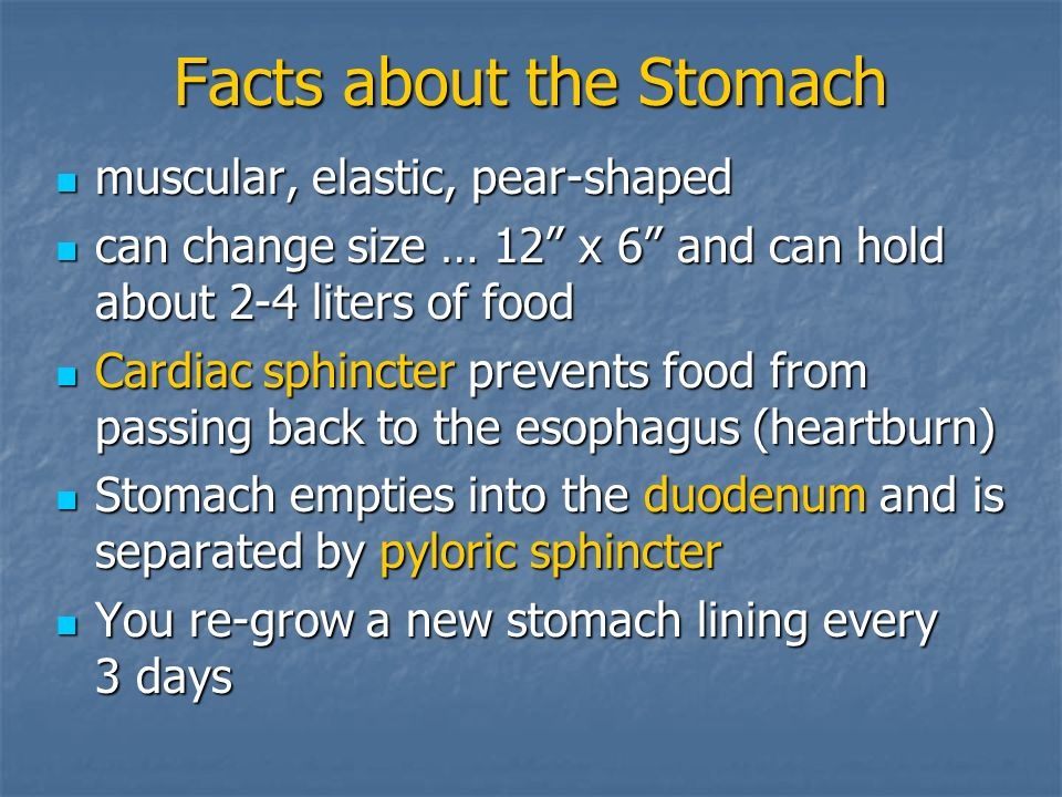 Facts about the Stomach