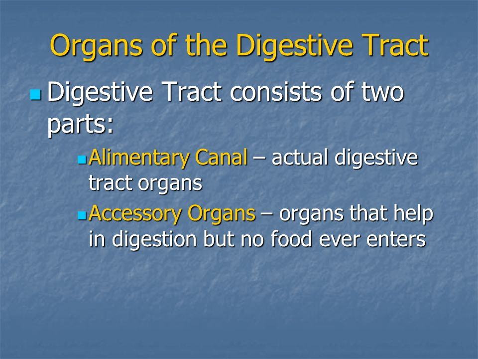 Organs of the Digestive Tract