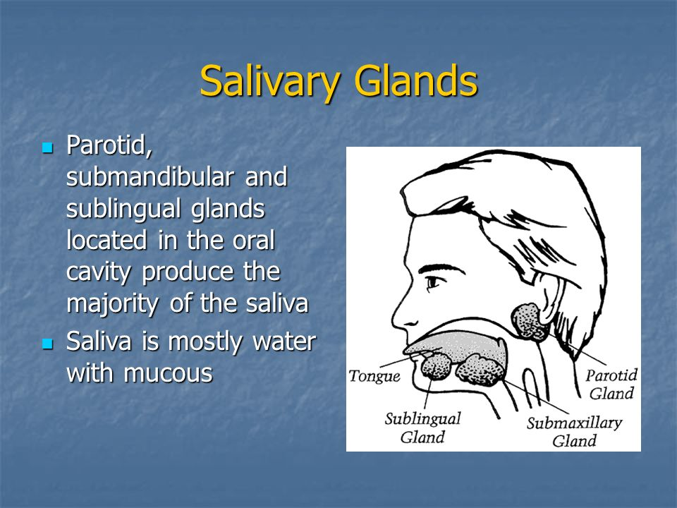 Salivary Glands Parotid, submandibular and sublingual glands located in the oral cavity produce the majority of the saliva.