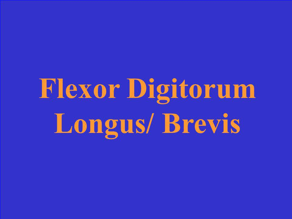 Flexor Digitorum Longus/ Brevis