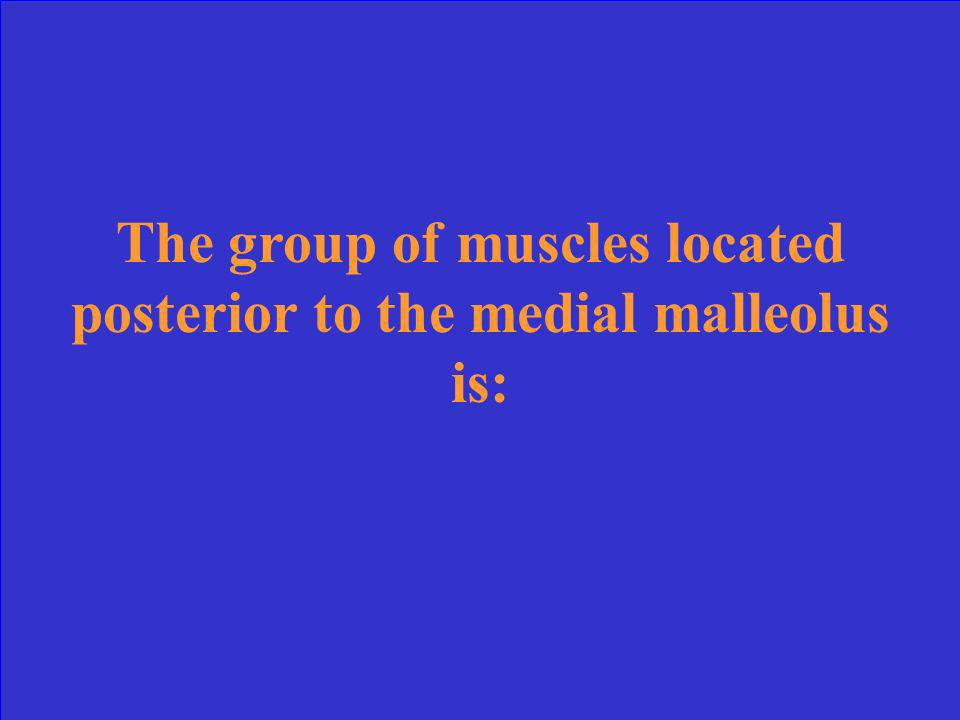 The group of muscles located posterior to the medial malleolus is: