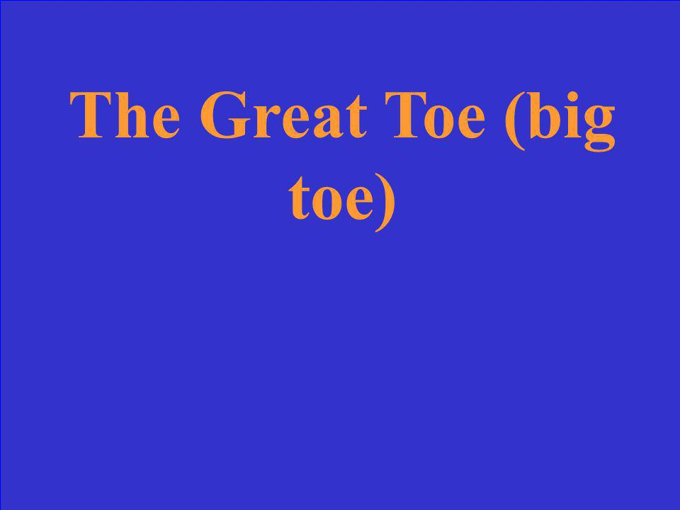 The Great Toe (big toe)