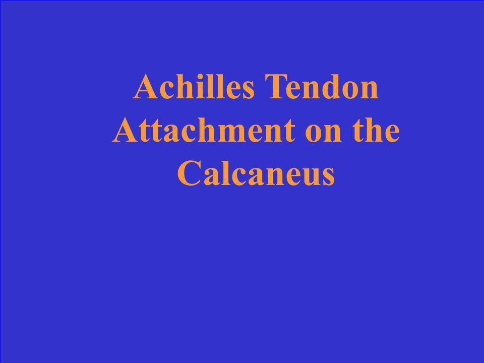 Achilles Tendon Attachment on the Calcaneus