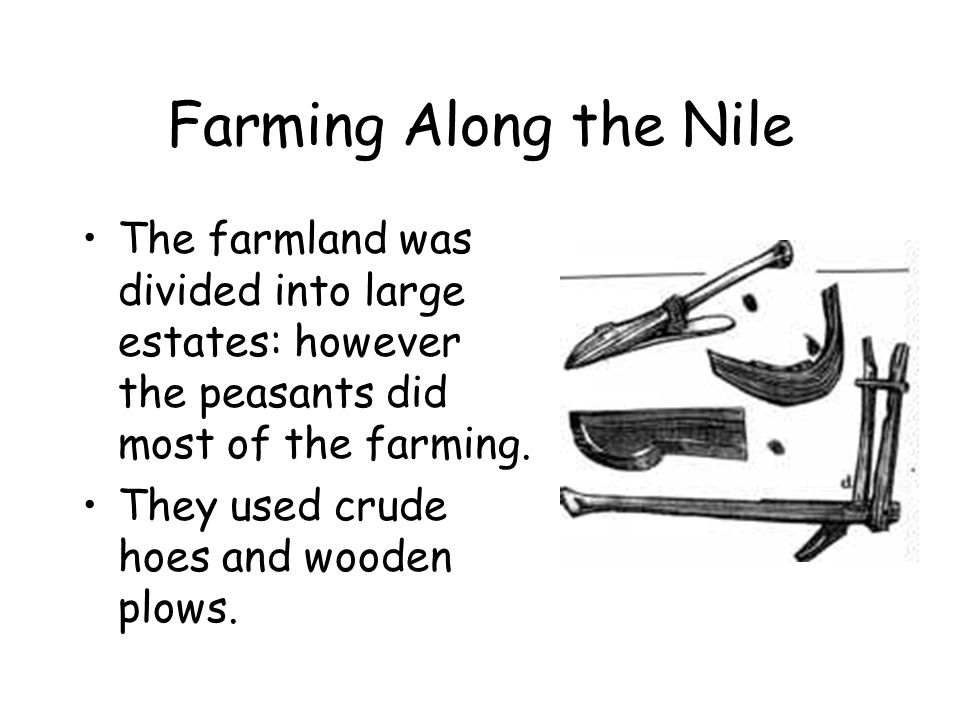 Farming Along the Nile The farmland was divided into large estates: however the peasants did most of the farming.