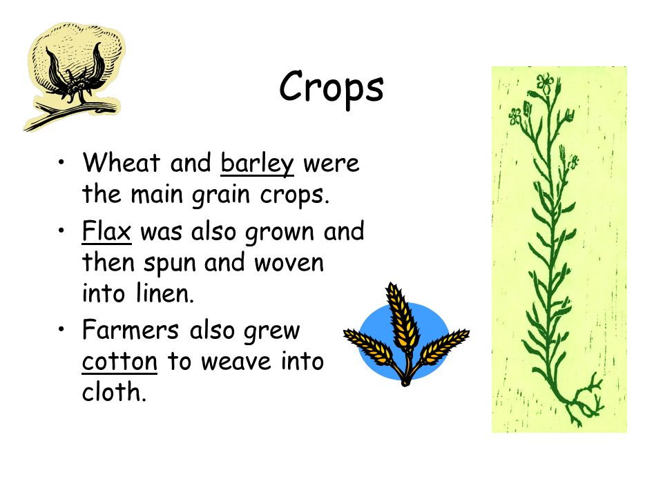 Crops Wheat and barley were the main grain crops.
