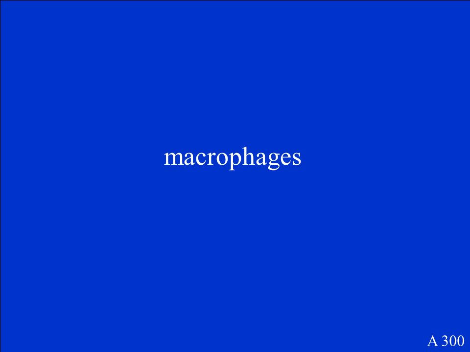 macrophages A 300
